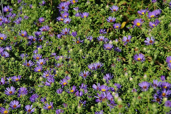 A Garden Diary Drought Tolerant Perennials