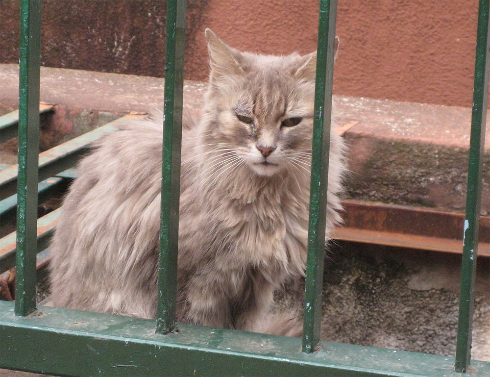 Poemas del r o wang the cats of buenos aires the bot nico for Ahuyentar gatos del jardin