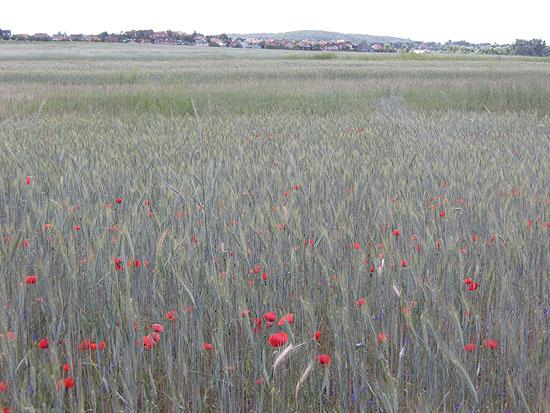 Csömör, Kálvária-domb a mezőről nézve