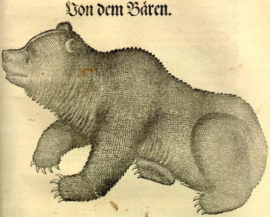 Conrad Gesner: Historia animalium. Bear