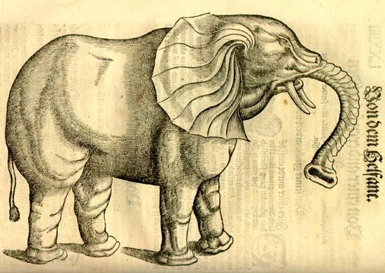 Elefánt. Gesner, Historia animalium, 1551