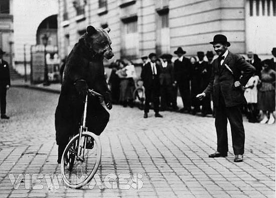 bear-on-bicycle-6.jpg