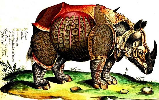 The rhinoceros of Dürer in Ulisse Aldrovandi