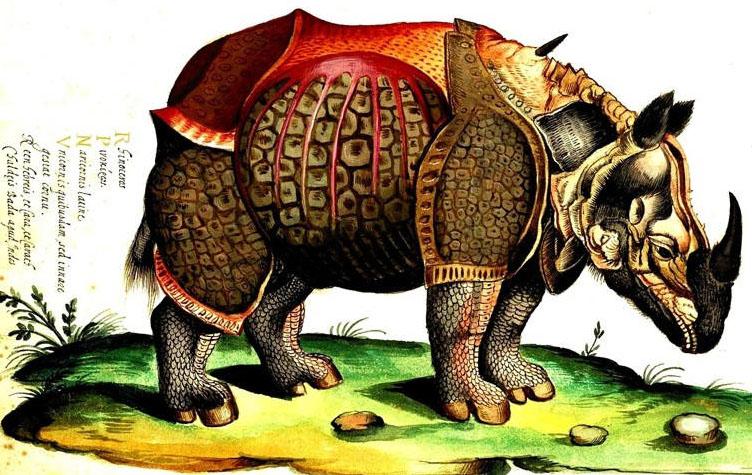 aldrovandi-rhinoceros.jpg