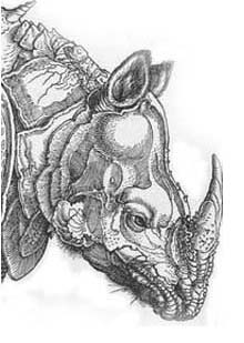 Dürer, rhinoceros, engraving, 1515