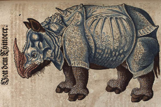 The rhinoceros of Dürer in the Thierbuch of Conrad Gessner, 1563