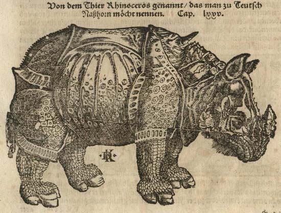 The rhinoceros of Dürer in the Cosmographia of Sebastian Münster, 1598
